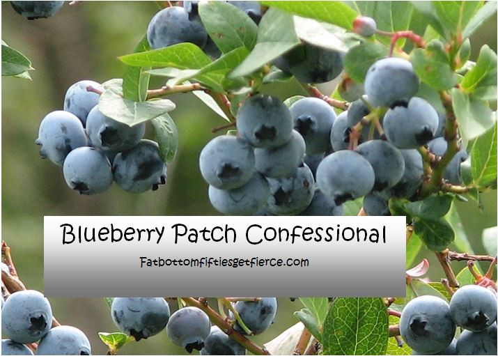 Blueberry Tales for The Picking